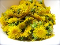 dandelion sugaring